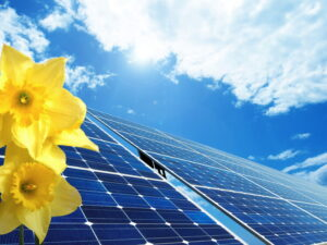 solar-panels-with-flower-in-forefront